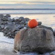 Pumpkin by sea and stones — Stock Photo #64509517