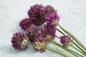 Buquê de flores roxas leek selvagem — Fotografia Stock