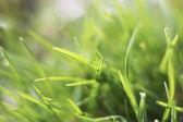 Extracto de hierba verde blurY — Foto de Stock