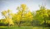 Gula och gröna träd natur landskap reflektion sjö — Stockfoto