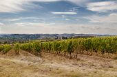 Hills of the Chianti Valley — Stock Photo