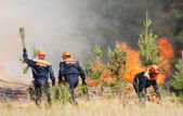 Firefighters extinguish a forest fire — Stock Photo