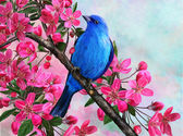The blue bird on a branch of apple — Stock Photo
