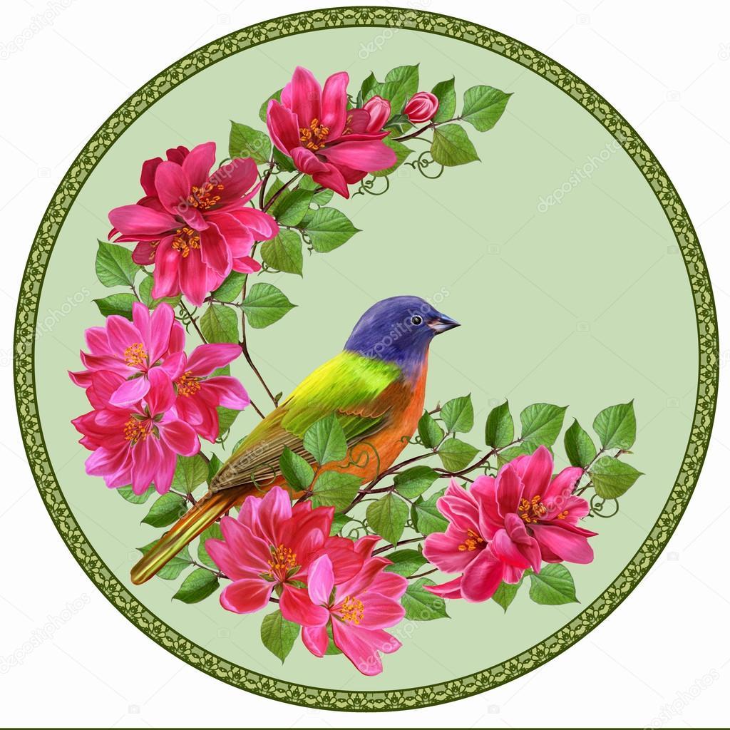 Красная райская птица