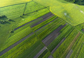 Aerial view on yellow fields — Stock Photo