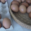 Person choosing the best egg from a carton of eggs — Stock Video #69593057