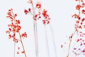 Red flowers in full bloom — Stock Photo