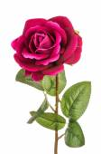 Artificial rose isolated. — Stock Photo