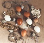 ニワトリおよびウズラの卵 — ストック写真