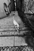 Dog upstairs in Lisbon — Stock Photo
