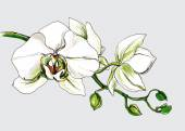 Decorative orchid flower branch — Cтоковый вектор
