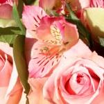 Beautiful bouquet — Stock Photo #67633949