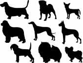 Silhouette pedigree dogs — Stock Vector