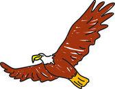 Pták orel bělohlavý — Stock vektor