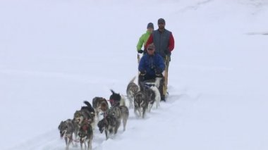 Dog sledding with husky dogs — Stock Video