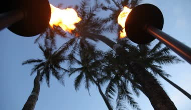 Tiki torches and palm trees — Stock Video