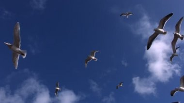Seagulls fly overhead — Stock Video