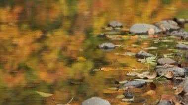 Rippling brook in fall — Stock Video