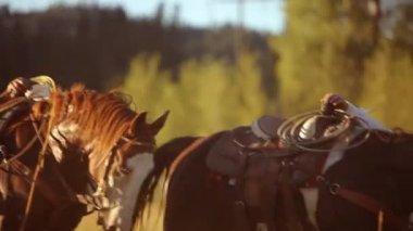 Cowboys saddle up horses — Stock Video
