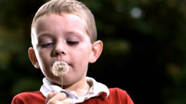 Boy blowing dandelion — Stock Video