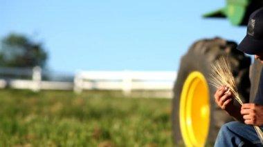 Farmer holding ears of wheat — Stock Video