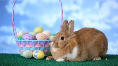 Bunny and Easter basket — Stock Video