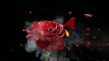 Red frozen rose explodes — Stockvideo