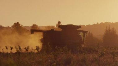 Tractor harvesting at sunset — Stock Video
