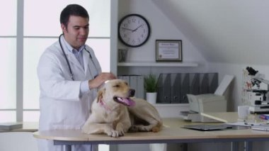 Veterinarian giving dog a checkup — Stockvideo