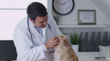 Doctor giving cat a checkup — Stock Video