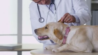 Doctor giving dog a checkup — Stock Video