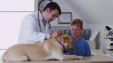 Veterinarian gives dog a checkup — Stock Video