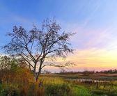 Tree at dawn — Stock Photo