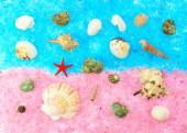 Colored seashells on a pink and blue sea salt — Stock Photo