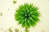 Green abstract nature background — Stock Photo