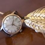 Old wrist watch — Stock Photo #70742173