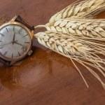 Old wrist watch — Stock Photo #70834579