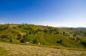 Sommerwiese in Karpaten — Stockfoto