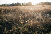 Grass in the field at sunset — Stock Photo