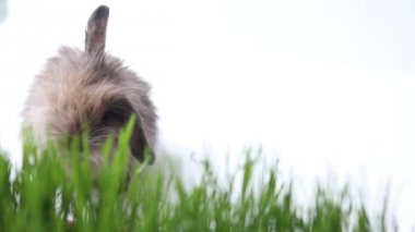 Easter bunny on green spring grass — Vídeo de stock
