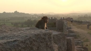 India Karnataka Monkey Hampi. The ruins of Vijayanagara — Video Stock