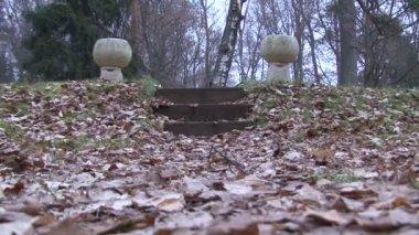 Hojas de otoño — Vídeo de stock