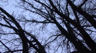 Turning beneath bare tree branches against winter sky — Stock Video