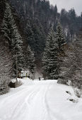 Winter landscape in the western Ukrainian Carpathians — Stock Photo