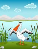 Pelican on the waterside — Stock Vector