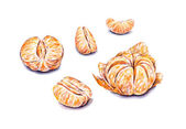 Ripe watercolor peeled tangerines. Handwork. Tropical fruits. Healthy food. — Stock Photo