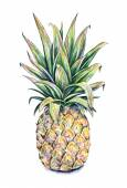Pineapple on a white background. Watercolor colourful illustration. Tropical fruit. Handwork — Stock Photo