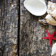 Background made of shells and starfish on wooden table Selective Focus — Stock Photo #78005816