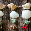 Starfish, shells, shell snails column on the old wooden table selective focus — Stock Photo #78006272
