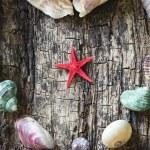 Heart of seashells, shells, shells, starfish closeup selective focus — Stock Photo #78006358